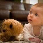 bebek-olan-evde-hayvan-beslemek-dogrumudur-500x302
